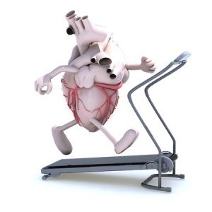 Why are aerobics exercises good for the heart?